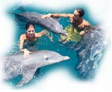 Swiming with the dolphins